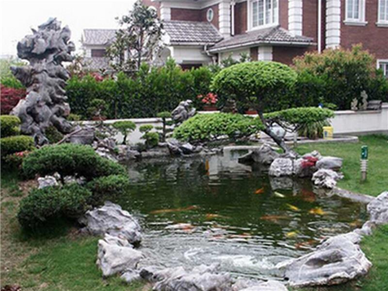 后院鱼池风水图片